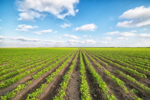 Affiancamento in agricoltura agevolato per i giovani
